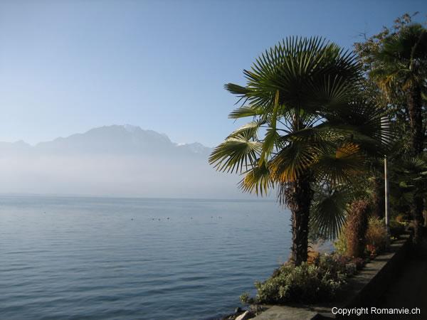 montreux-palmiers