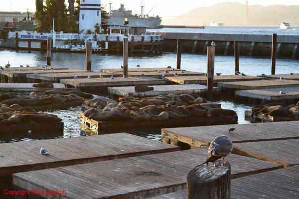 fishermans-wharf-san-francisco